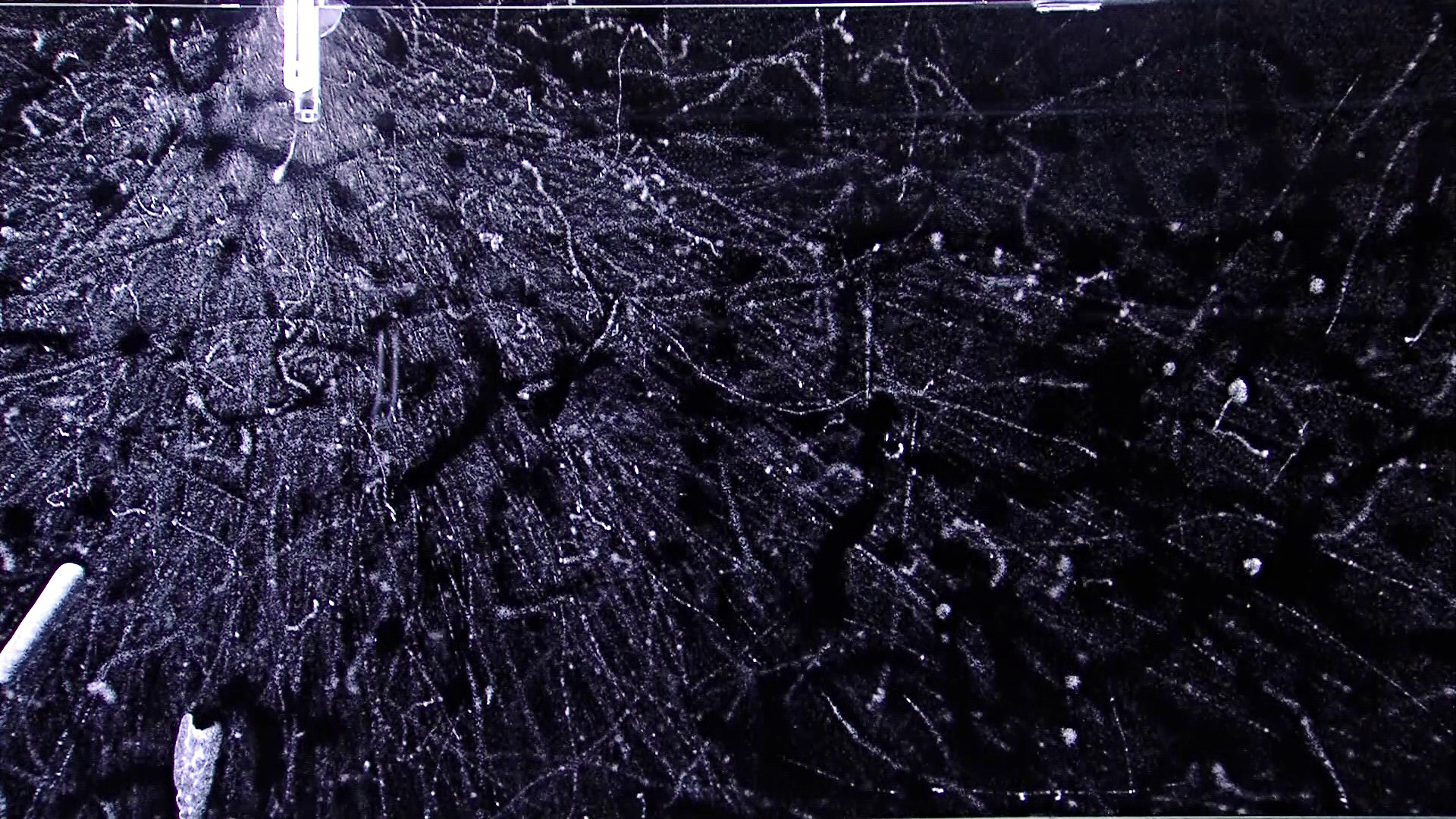 Cloudy tracks of electrons emmited from the beta source of the Radionuclide module of the Nuledo Unica cloud chamber.